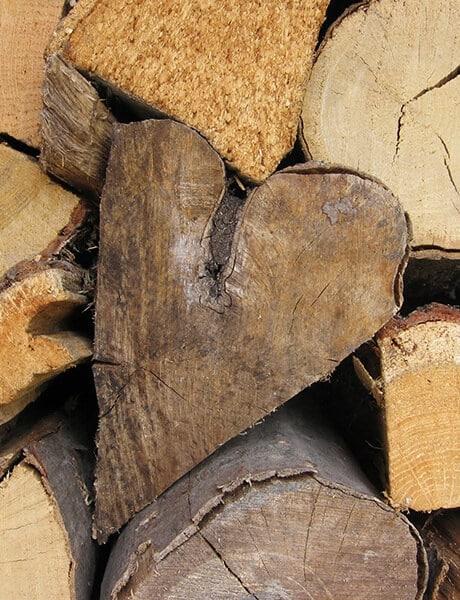 haubanage tronc d'arbre