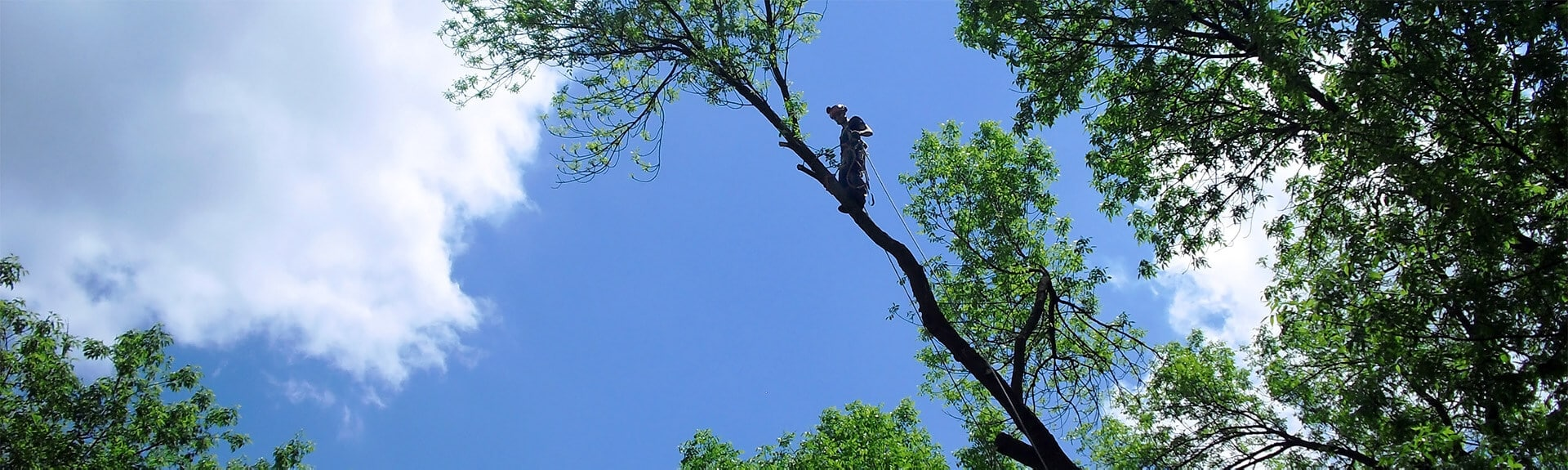 élagage d'arbre