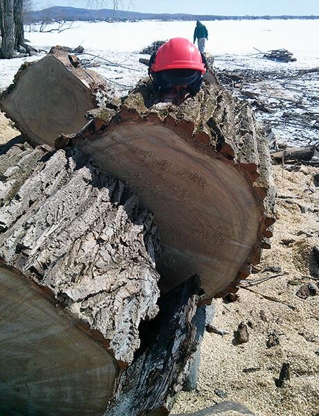 prix abattage d'arbres et élagage